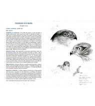 Oiseaux du bocage breton