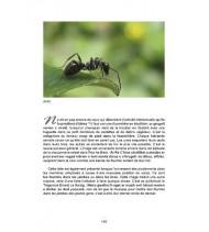 Le Folklore des Insectes et Autres Petites Bestioles