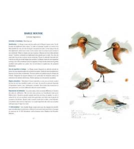 Oiseaux des côtes bretonnes