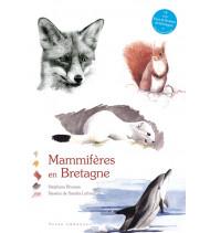 Mammifères en Bretagne